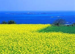 SEOUL - Đảo JEJU - NAMIISLAND